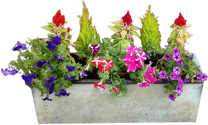 Concrete Planter flowers no background PNG Image.