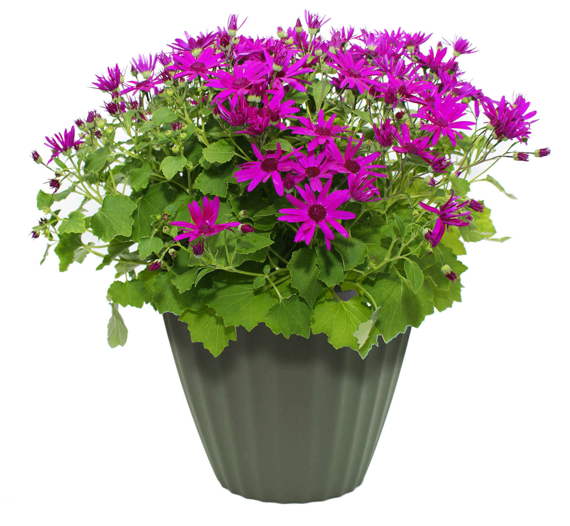 Flower Pot PNG Transparent Flower Pot.PNG Images..