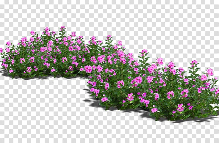 Pink flowers, Bonsai Flowerpot, Potted flowers transparent.