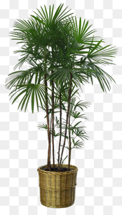 Download Free png Potted Plant PNG Images.
