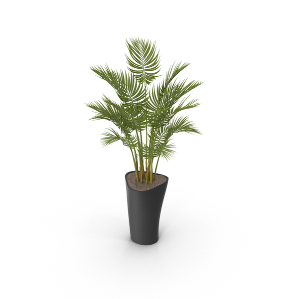 Potted Plant PNG Images & PSDs for Download.
