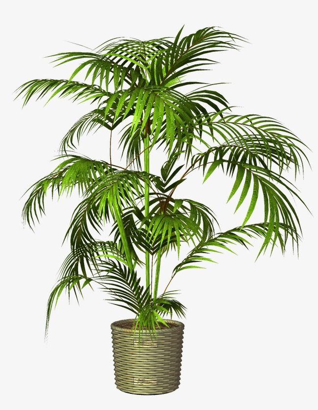 Potted, Plant, Pot PNG Transparent Clipart Image and PSD.