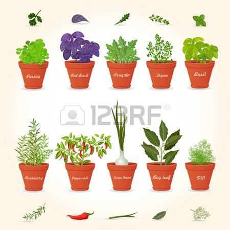 3,923 Potted Plant Cliparts, Stock Vector And Royalty Free Potted.