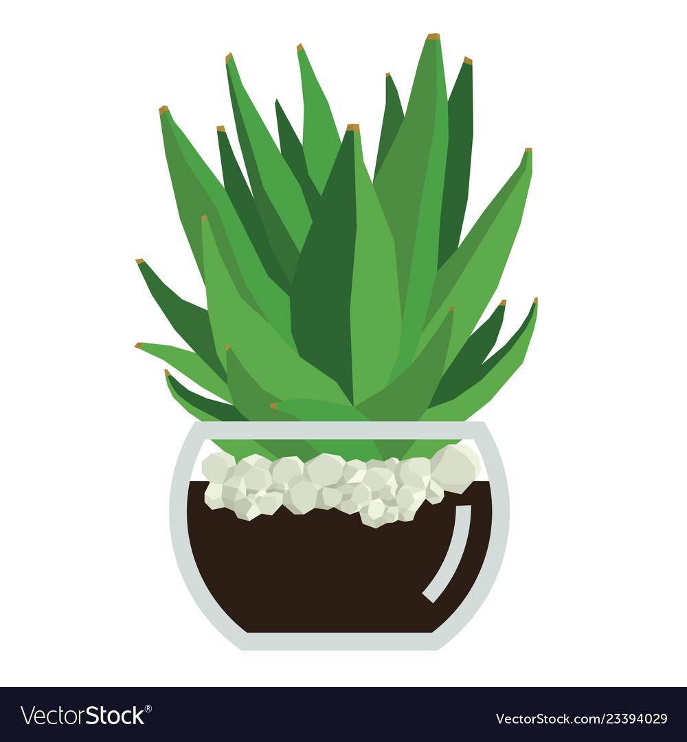 Succulent plant in glass pot.