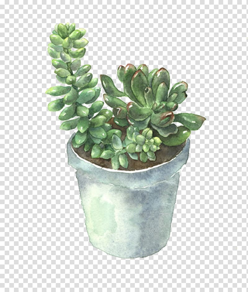 Green leaf plant on gray pot , Succulent plant Flowerpot.