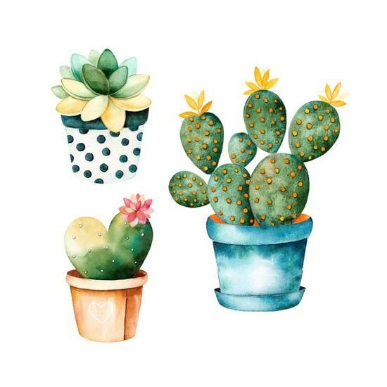 Watercolor Handpainted Cactus Plant and Succulent Plant in.