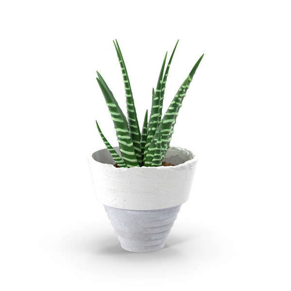 Succulent PNG Images & PSDs for Download.