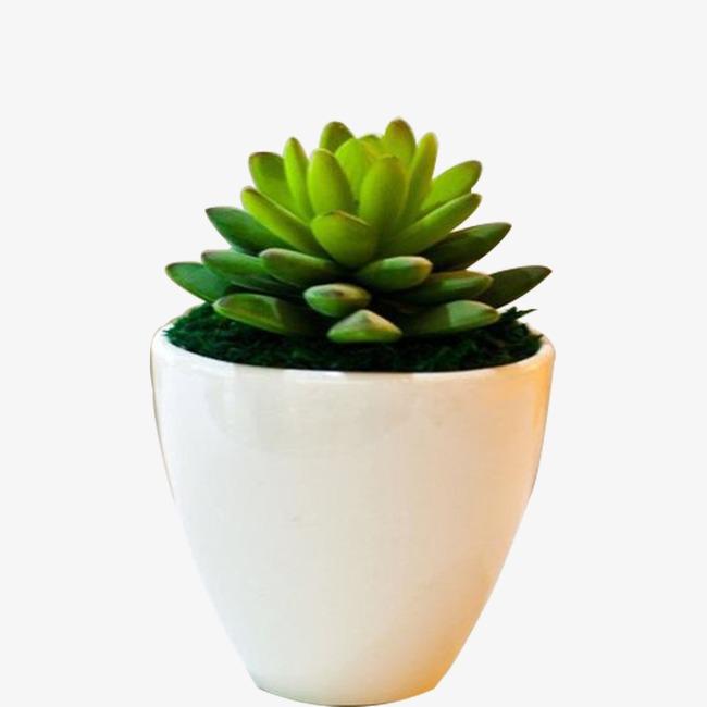Succulent Plant Png & Free Succulent Plant.png Transparent.