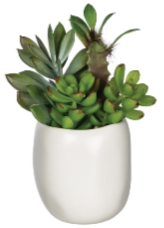 potted succulent, style 2.