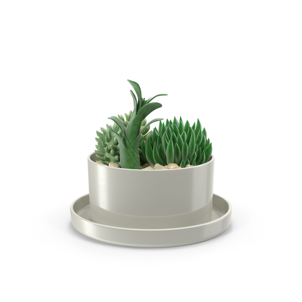 Succulents in Pot PNG Images & PSDs for Download.