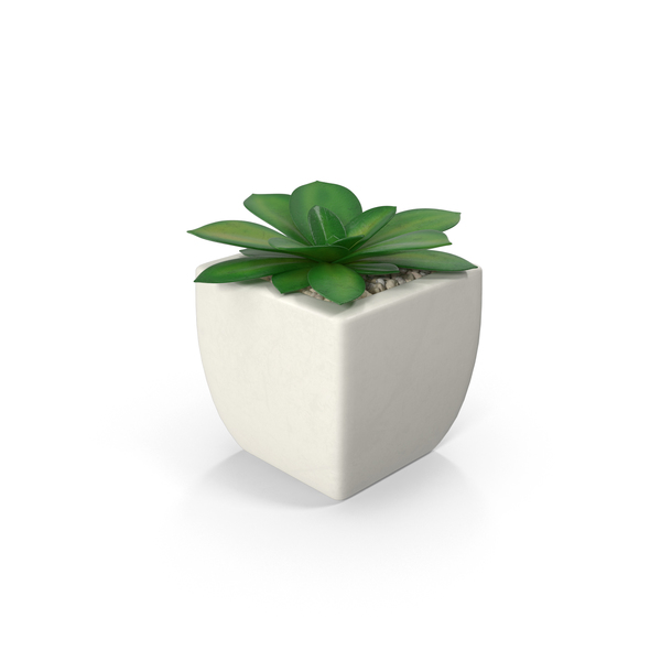 Potted Succulent Plant PNG Images & PSDs for Download.