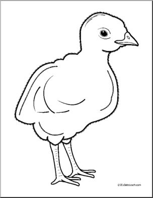 Clip Art: Baby Animals: Turkey Poult (coloring page).