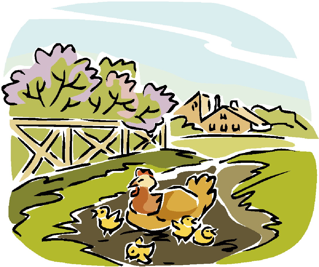 Pictures Of Chickens On A Farm.