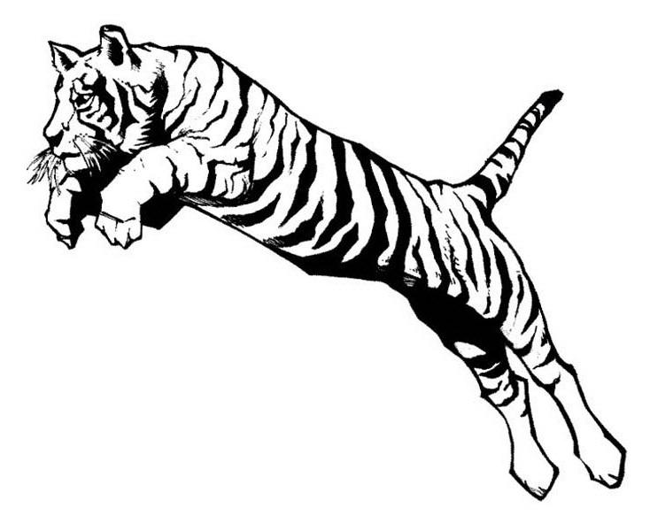 Pouncing Tiger Clip Art.
