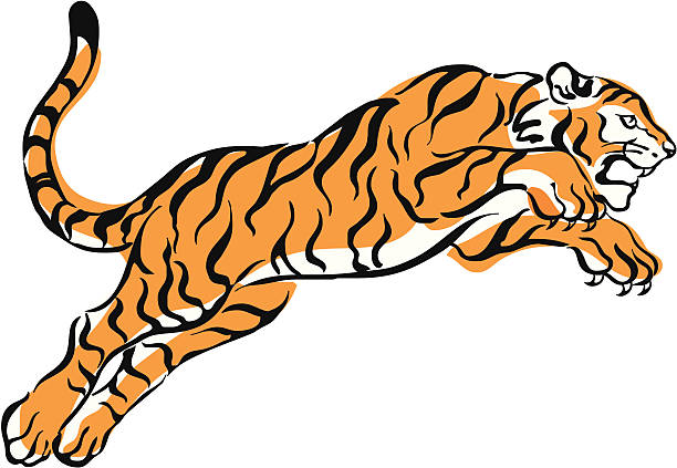 Tiger Pounce Clip Art, Vector Images & Illustrations.
