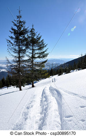 Picture of Backcountry ski tracks in fresh powder snow csp30895170.