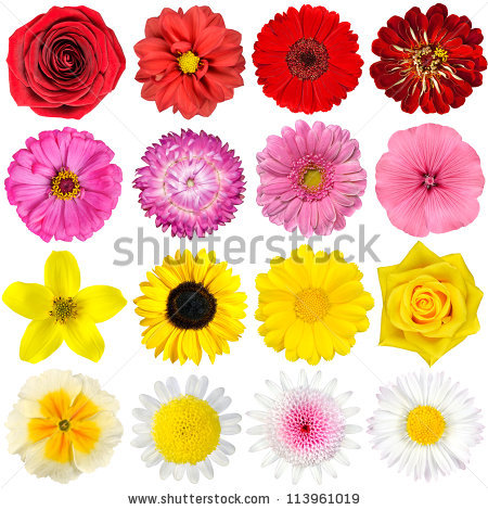 Red daisy flower free stock photos download (15,578 Free stock.