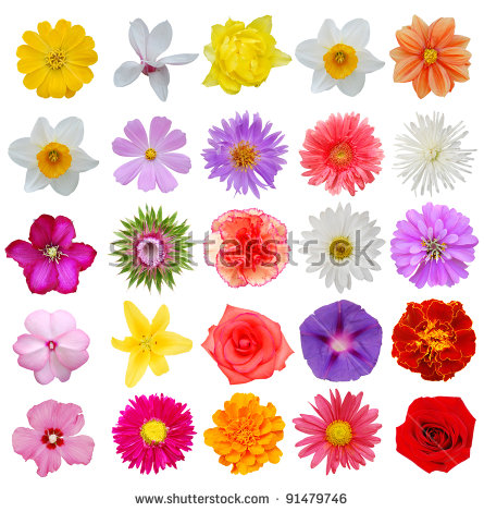 Isolated flowers free stock photos download (11,914 Free stock.