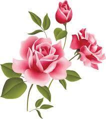 Roses on Pinterest.