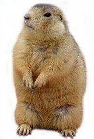 Free Prairie Dog Clipart.