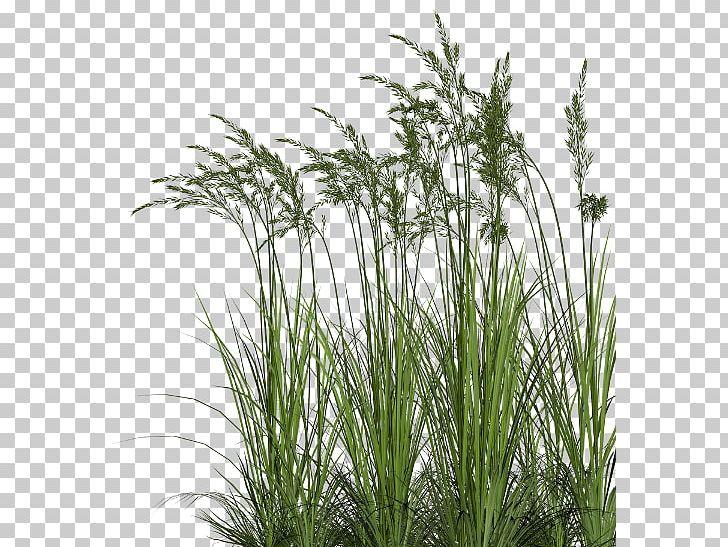 Centerblog Sweet Grass Prairie PNG, Clipart, Blog.
