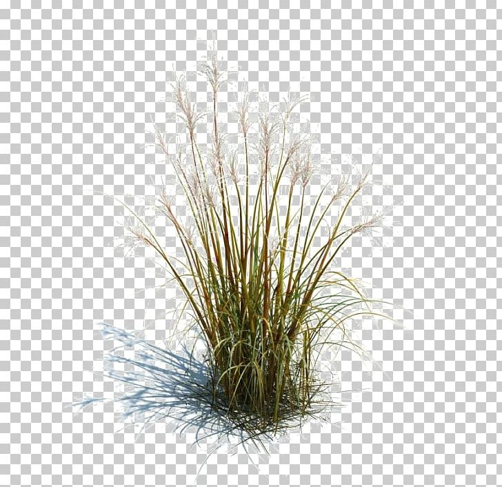 Prairie Grass Png, Transparent PNG, png collections at dlf.pt.