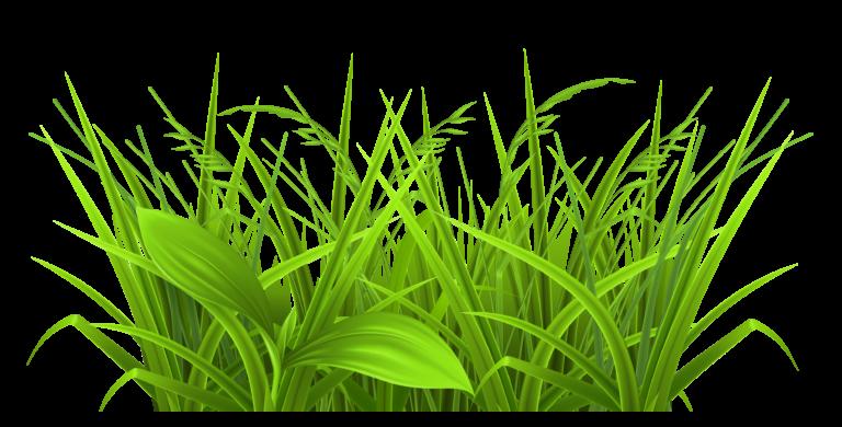Prairie or field wheat grass clipart.