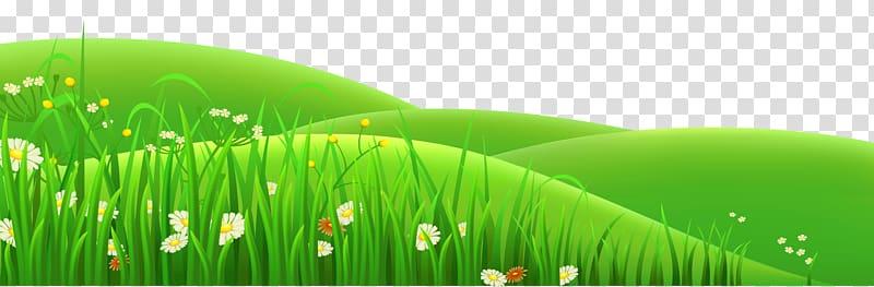 Flower Prairie , Grass Field transparent background PNG.