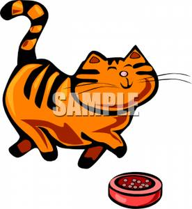 Tabby Cat Prancing In Front of a Dish of Food.