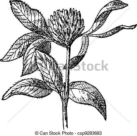 Red clover Clip Art and Stock Illustrations. 1,669 Red clover EPS.