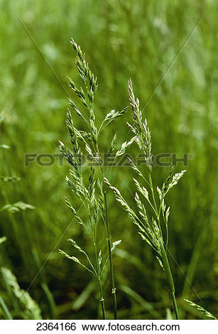 Stock Images of Agriculture.