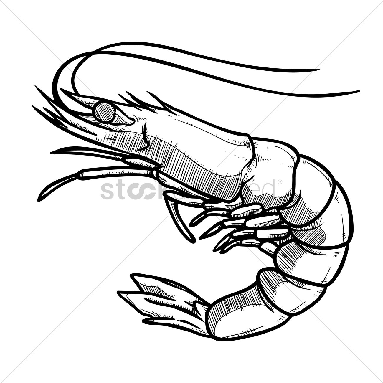 Prawn clipart black and white 5 » Clipart Station.