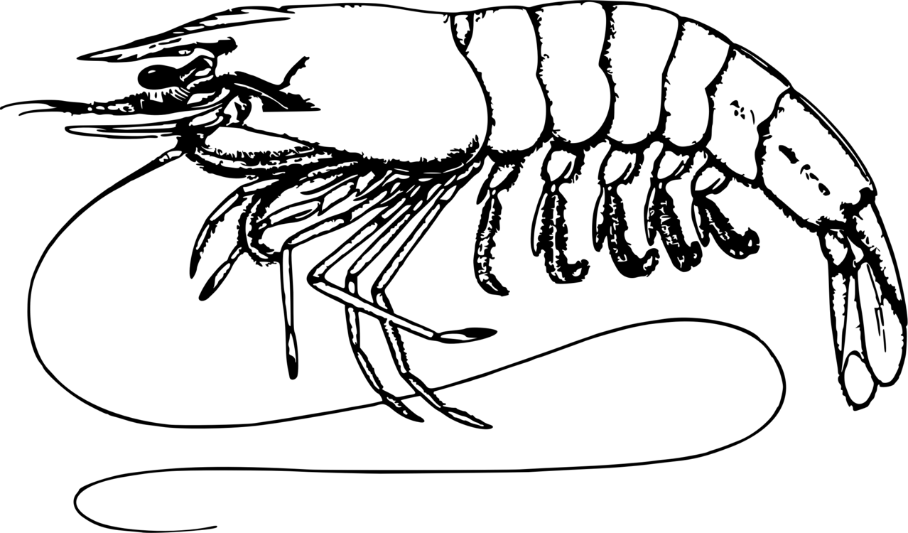 Prawn clipart black and white 2 » Clipart Portal.