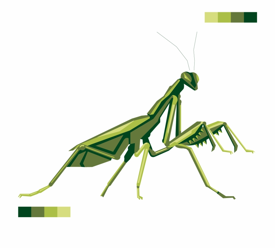 Transparent Praying Mantis Png Free PNG Images & Clipart.