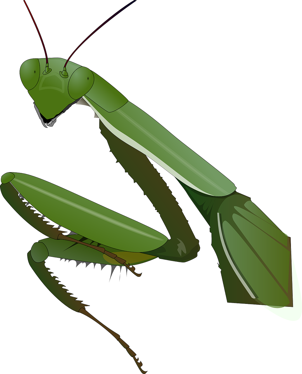 Praying Mantis Insect Nature PNG.