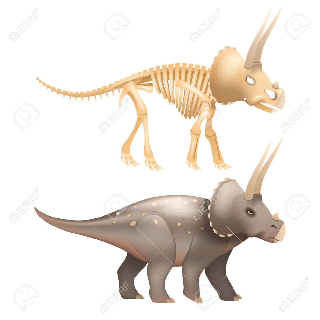 Life Triceratops Dinosaur With Skeleton In Prehistoric Times.