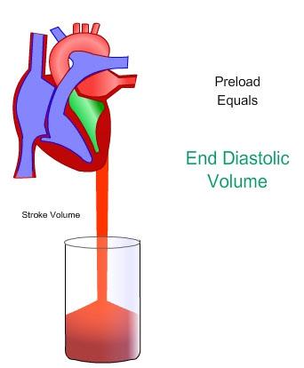 Vascular Concepts.