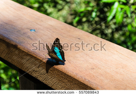Butterflies Colors Isolated Shining Stock Photos, Royalty.