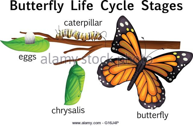 Butterfly Egg Stock Photos & Butterfly Egg Stock Images.
