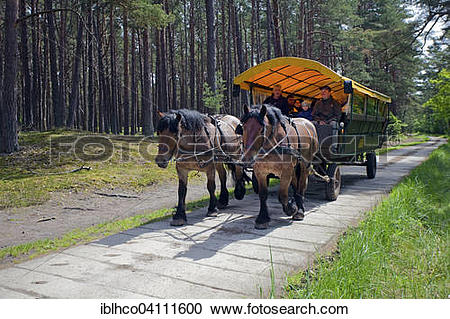 Stock Photography of Horse drawn carriage on the way to Darsser.