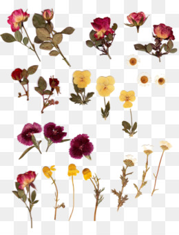 Pressed Flower PNG.