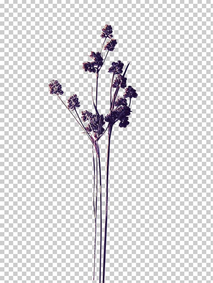 Pressed Flower Craft Stock Photography PNG, Clipart, Art.