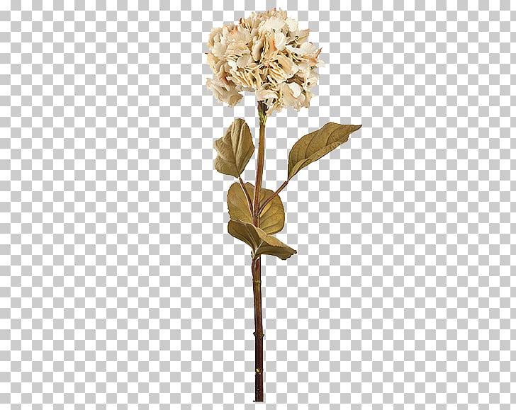 Floral design Pressed flower craft Petal, Dry flower.