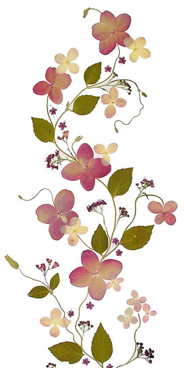 Pin by Kiara on Pressed flowers art.