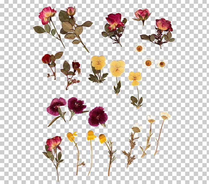 Pressed Flower Craft Herbarium Flower Bouquet PNG, Clipart.