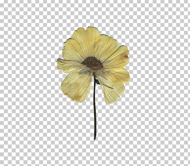 Pressed Flower Craft Floral Design Drawing PNG, Clipart, Art.