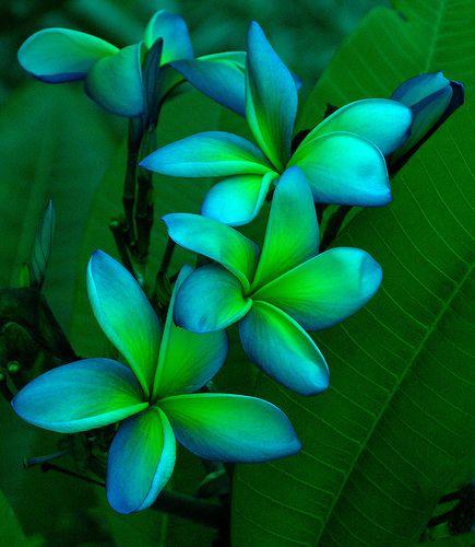 pretty exotic flowers #3