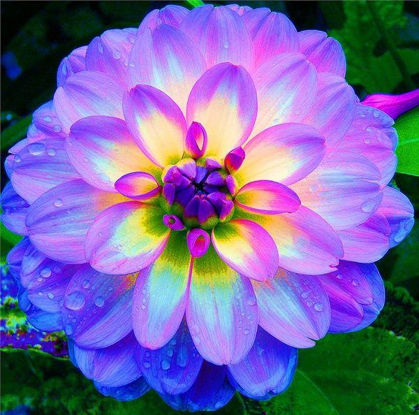 pretty exotic flowers #4