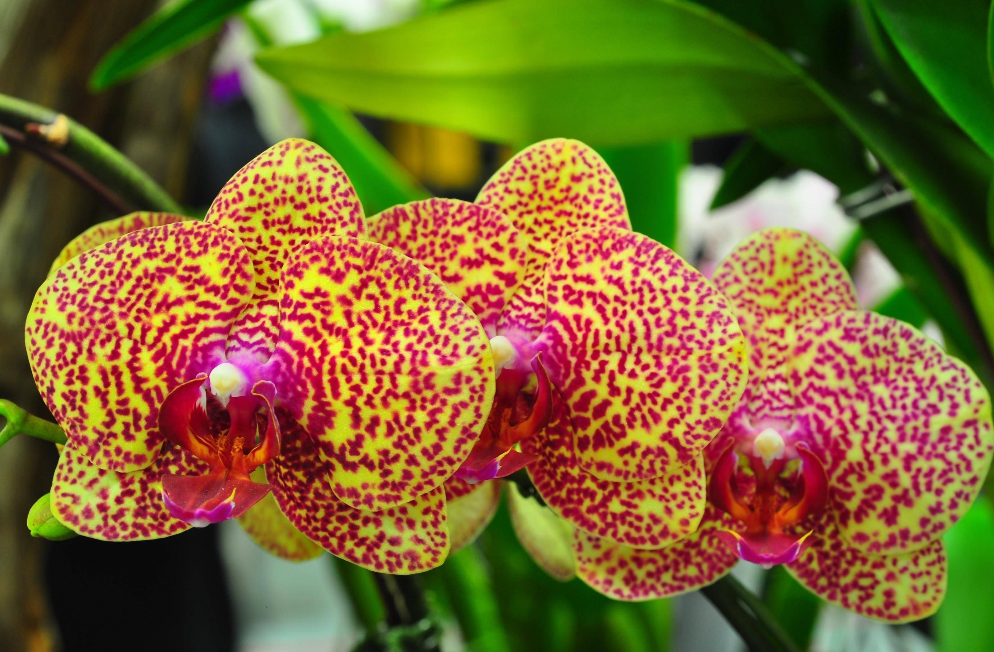 pretty exotic flowers #6