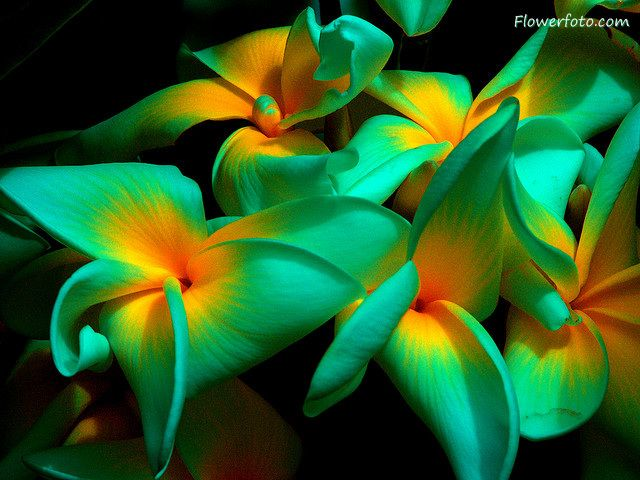 Pictures Of Exotic Flowers And Plants.